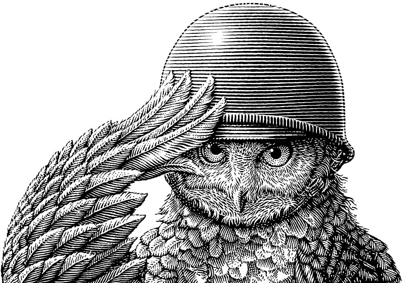 Owl With Army Helmet