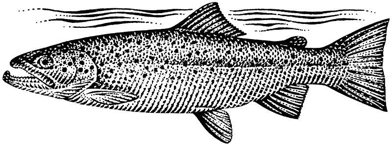 Lockland Salmon