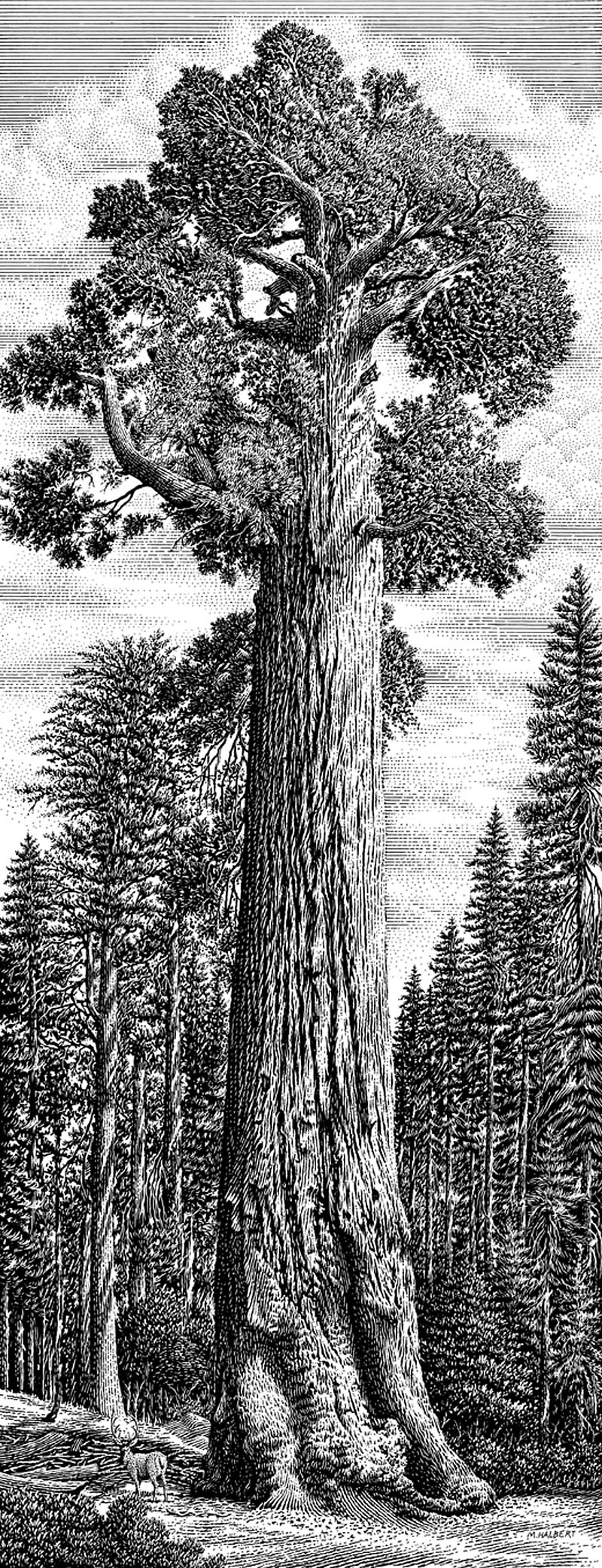 General Grant Giant Sequoia Tree