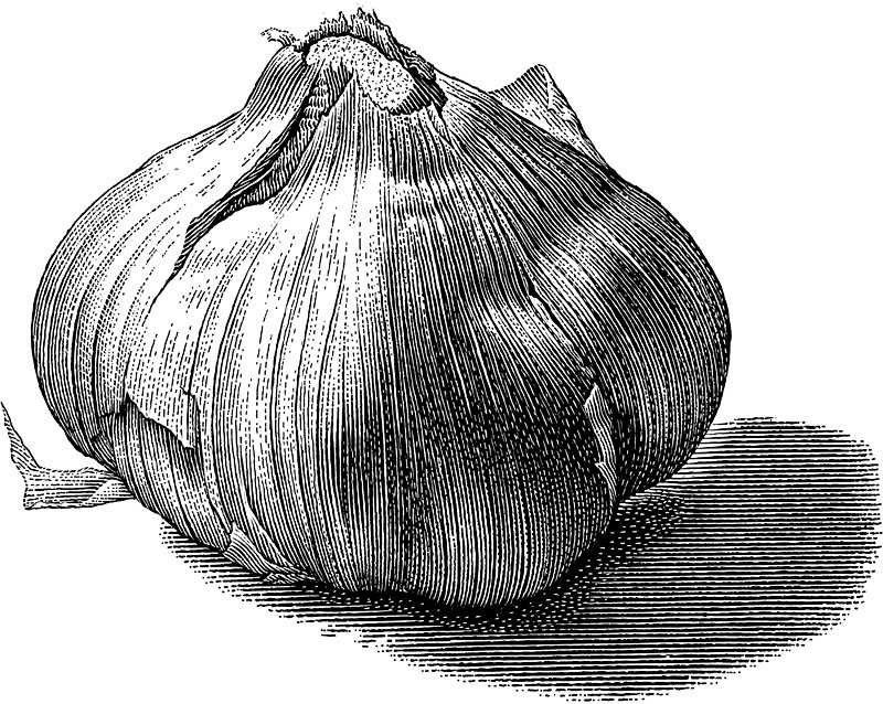 Giant_Garlic.jpg