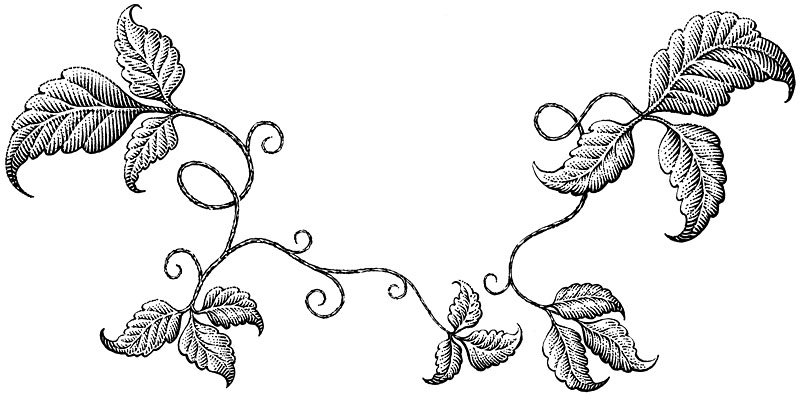 Decorative Leaf Border