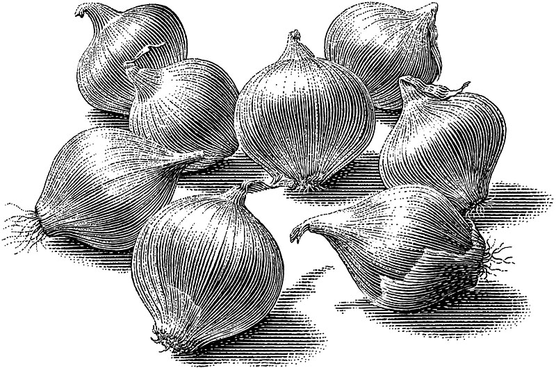 Pearl Onions