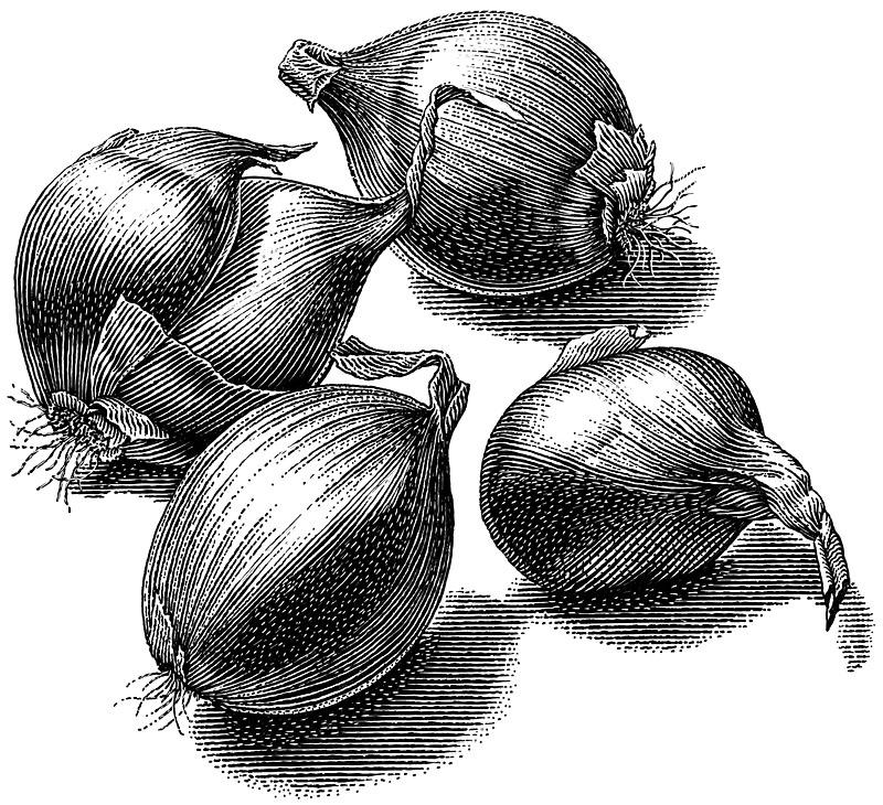 Shallot, Onions