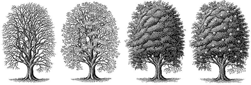 Trees Showing The Seasons-Winter, Spring, Summer, Fall