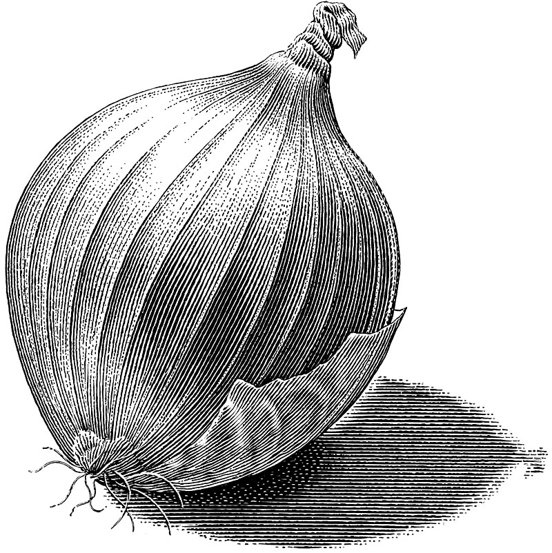 White Storage Onion