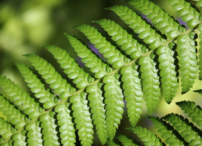 four-leaf.jpg