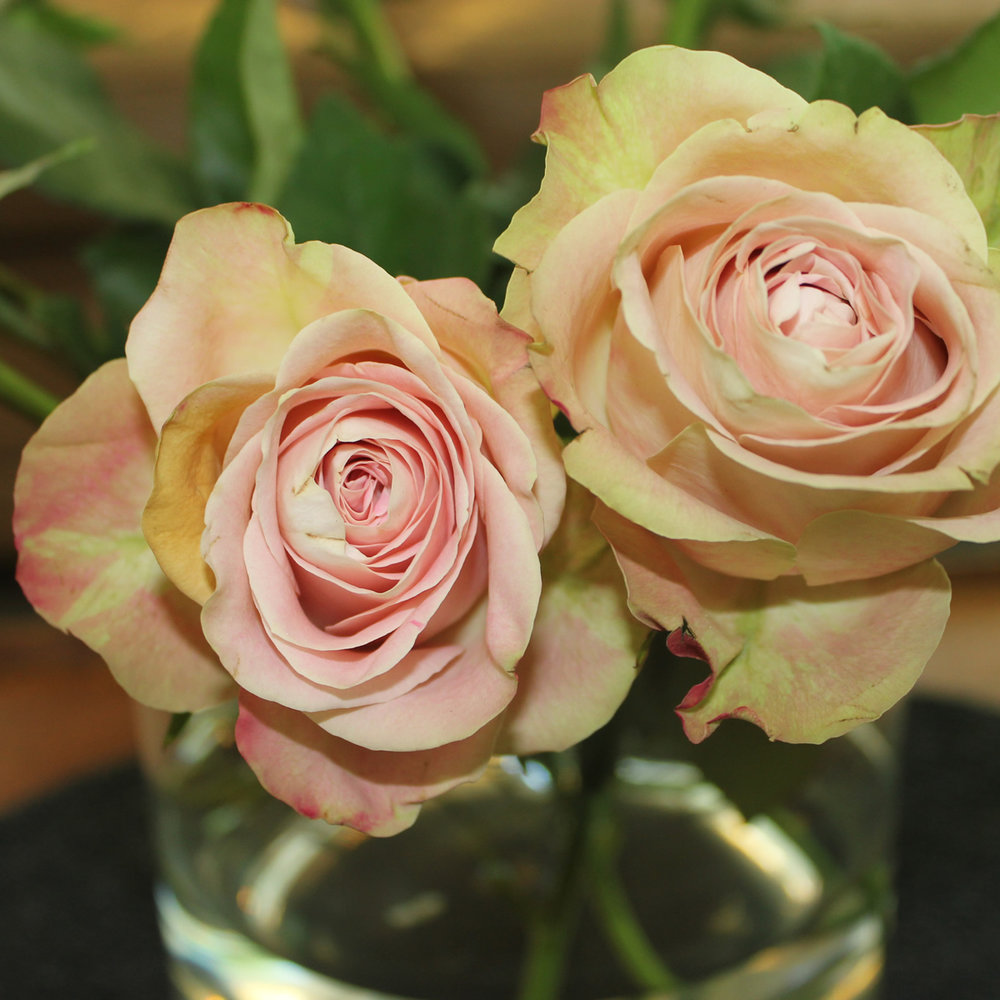 Rose in June Birth Flower of the Month Future King and Queen