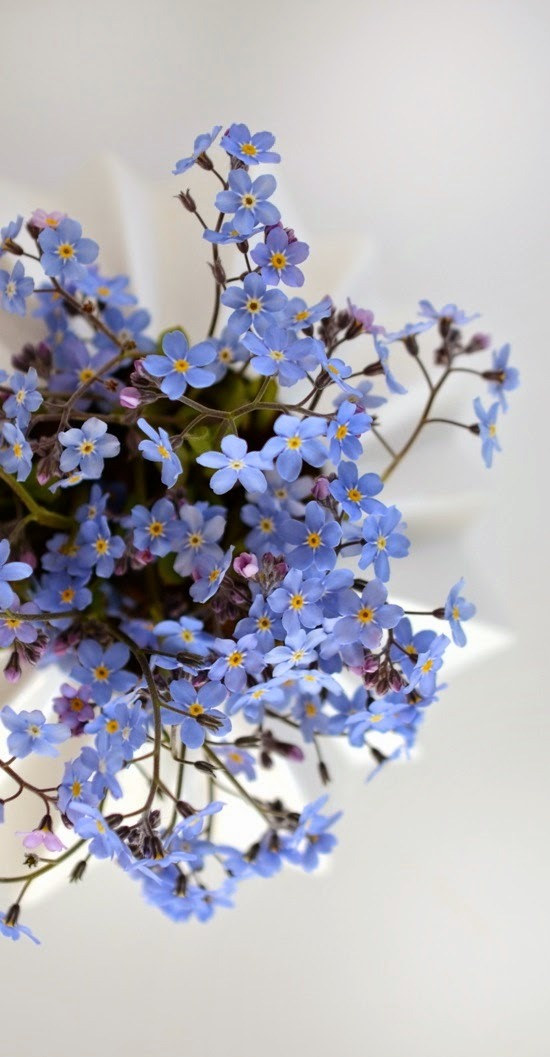 Stars of blue - Most Forget Me Nots are blue, which makes them a very bee-friendly flower to have in your garden.