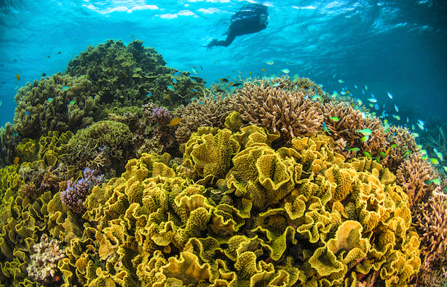 Great Barrier Reef, vegan and eco-friendly guide.
