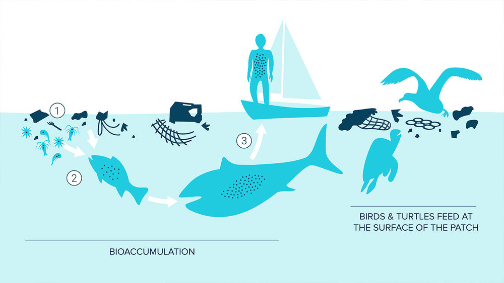 impact-of-plastics-biaccumulation-plastics-in-the-great-pacific-garbage-patch.jpg