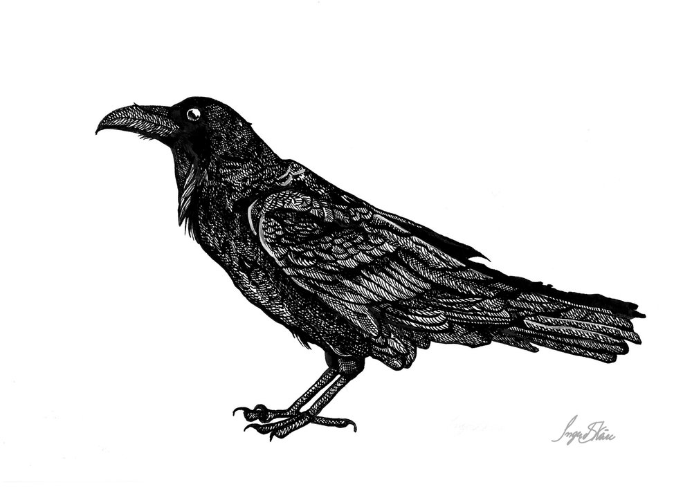 inktober-raven-hatching.jpg