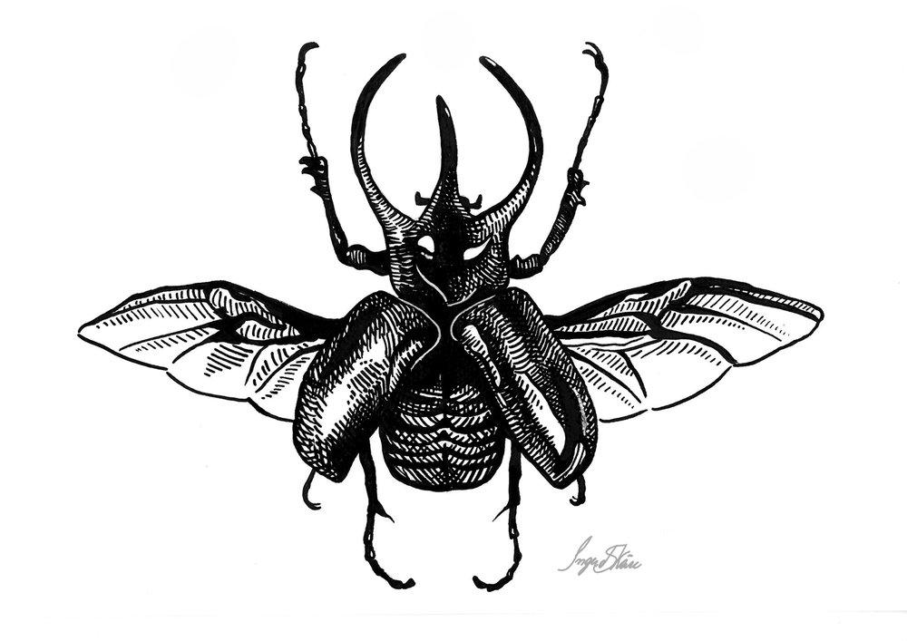inktober-atlasbeetle-hatching.jpg