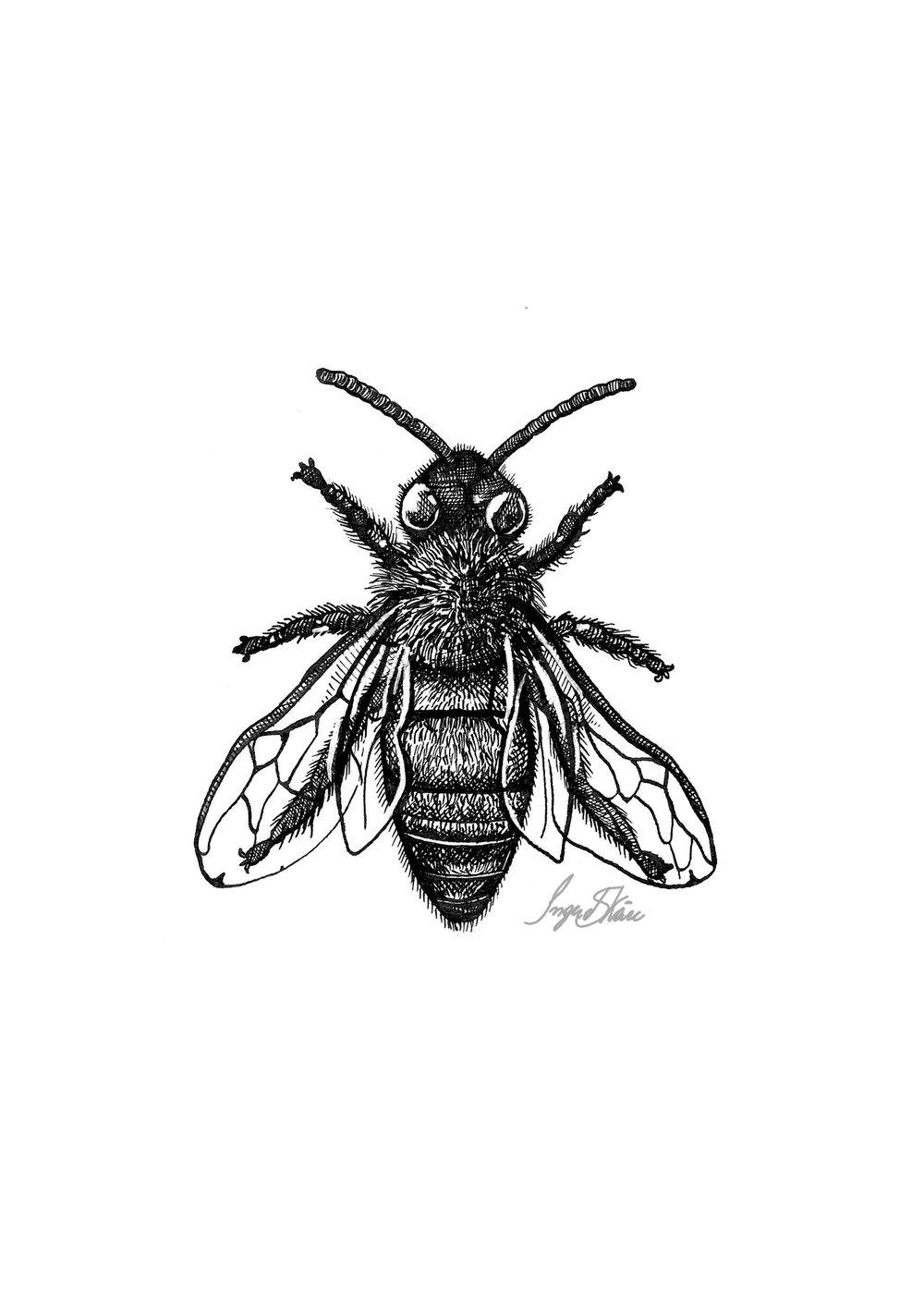 inktober-bee-hatching.jpg