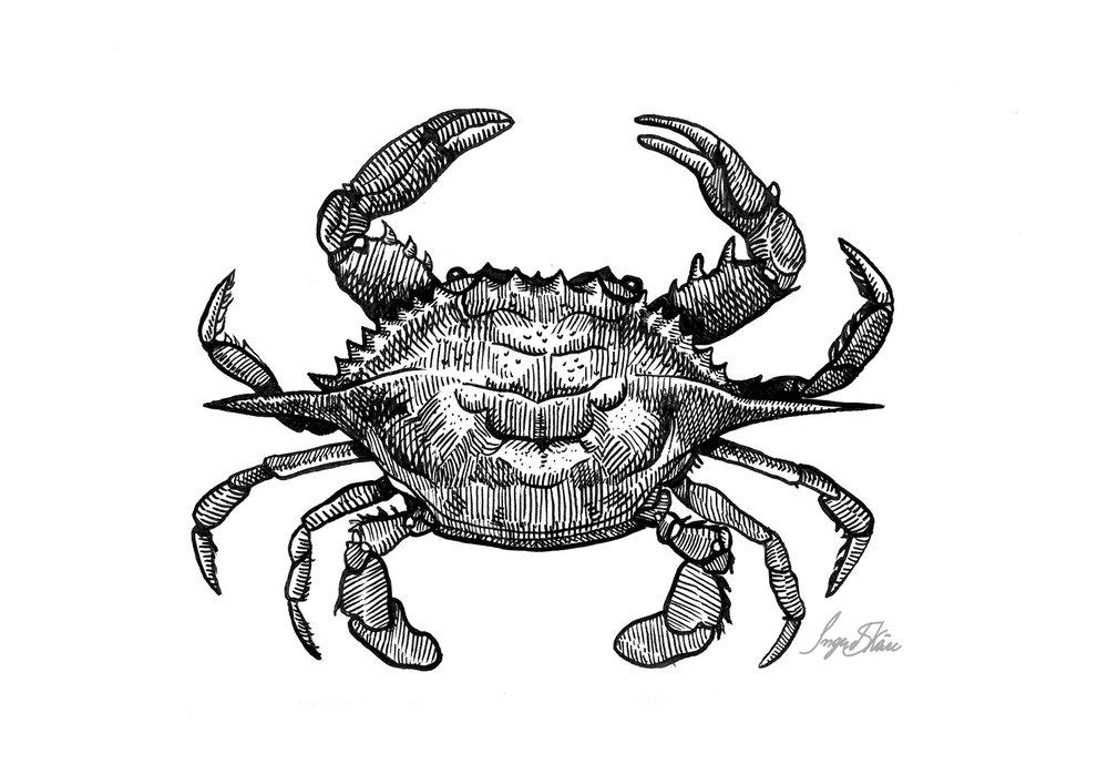 inktober-crab-hatching.jpg