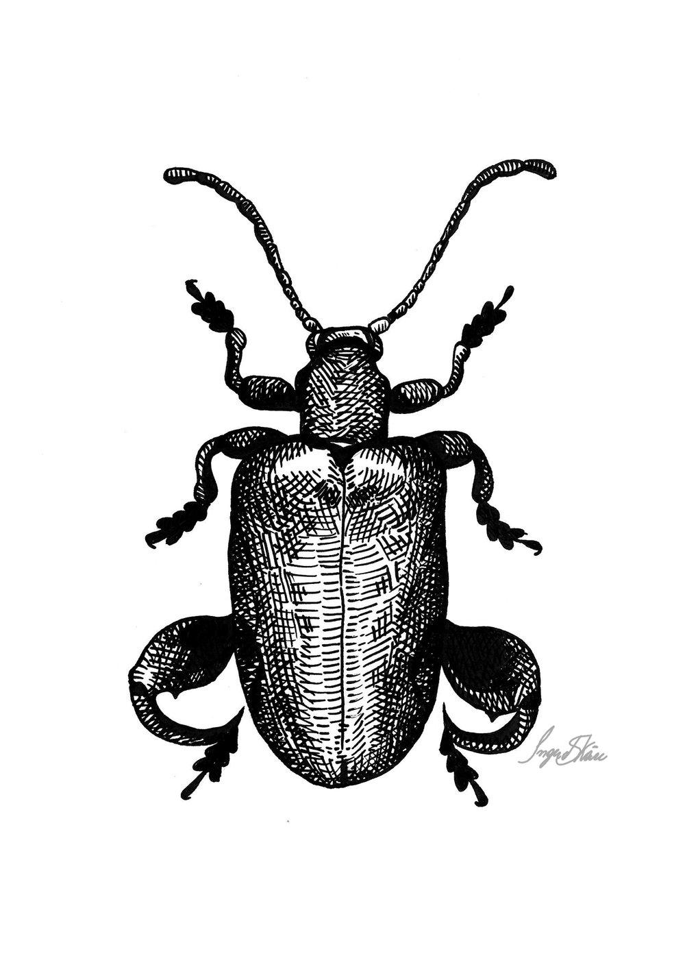 inktober-froglegbeetle-hatching.jpg