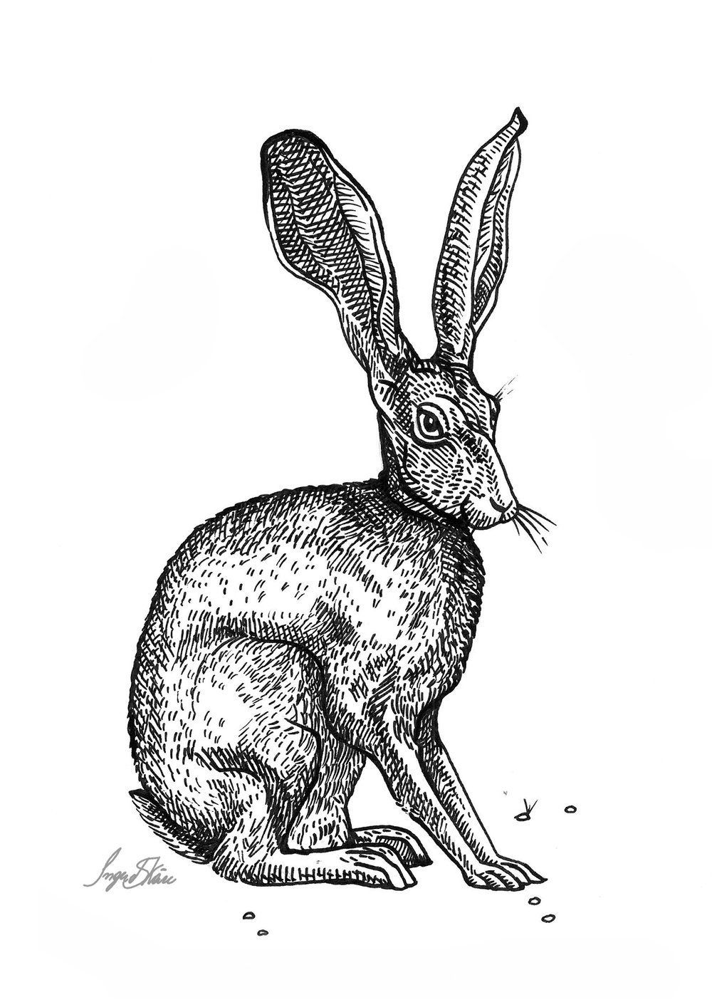 inktober-hare-hatching.jpg