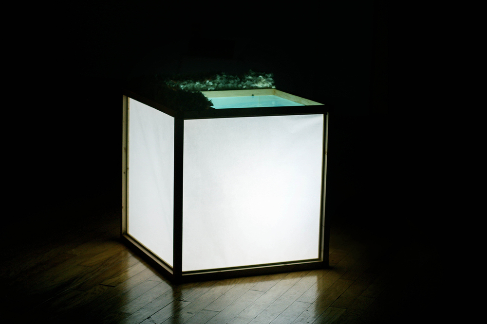 The Light Box