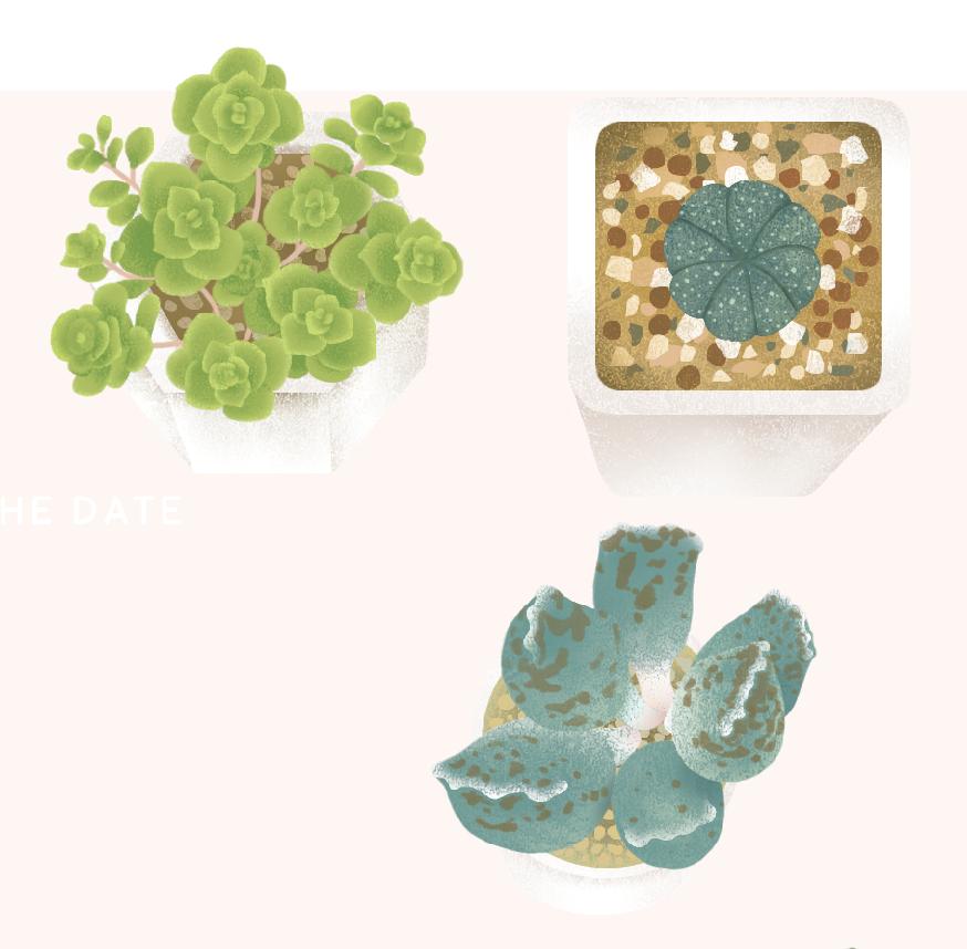 succulent01.png