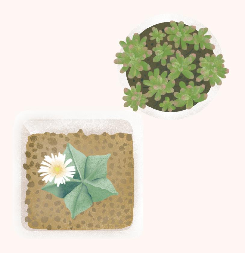 succulent03.png