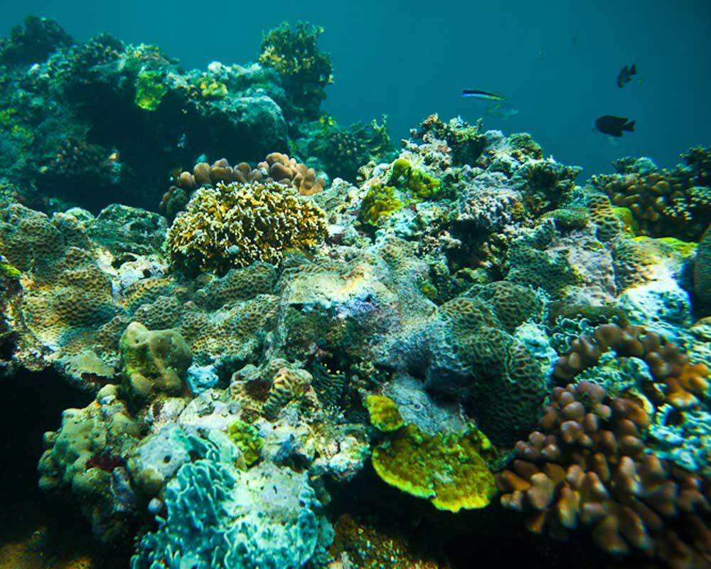 Solomons-coral.jpg