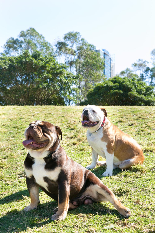 Henry & Duke-27.jpg