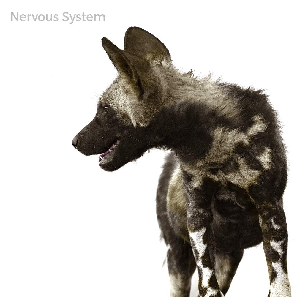 Nervous-System-Front-Cover.jpg