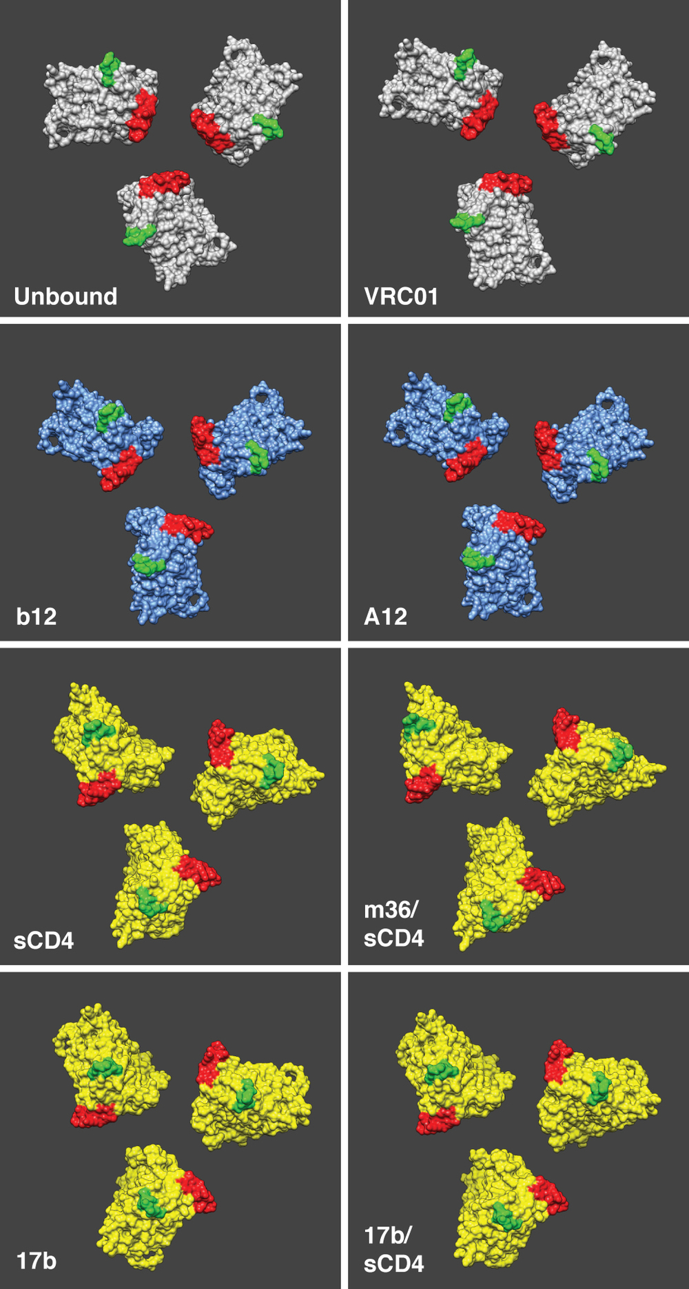 HIV-1 gp120 trimer models In order for HIV-1 to infect a CD4+ T-cell, the Envelope protein undergoes dramatic rearrangements to accommodate binding with two partner proteins on the cell surface. These events culminate in fusion of the virus membrane with the cell, and infection. This collection of HIV-1 Envelope models show stages of this process, and were derived by fitting protein domains from crystallography into density maps derived from cryo-EM. Adapted from Meyerson et. al. 2013 Proc Natl Acad Sci USA.