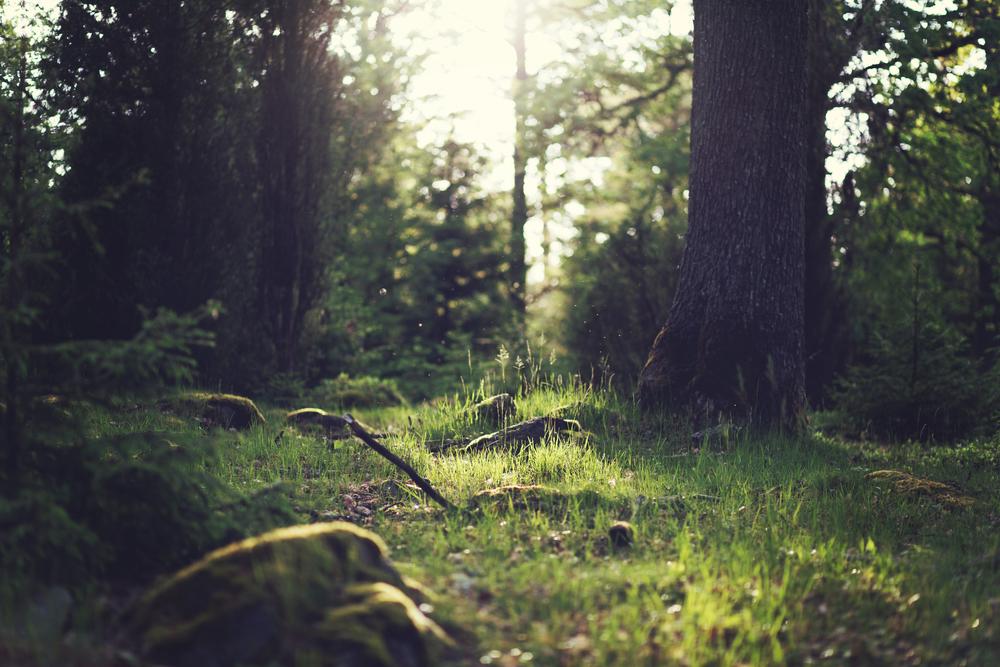 unsplash_forest_scene.jpg