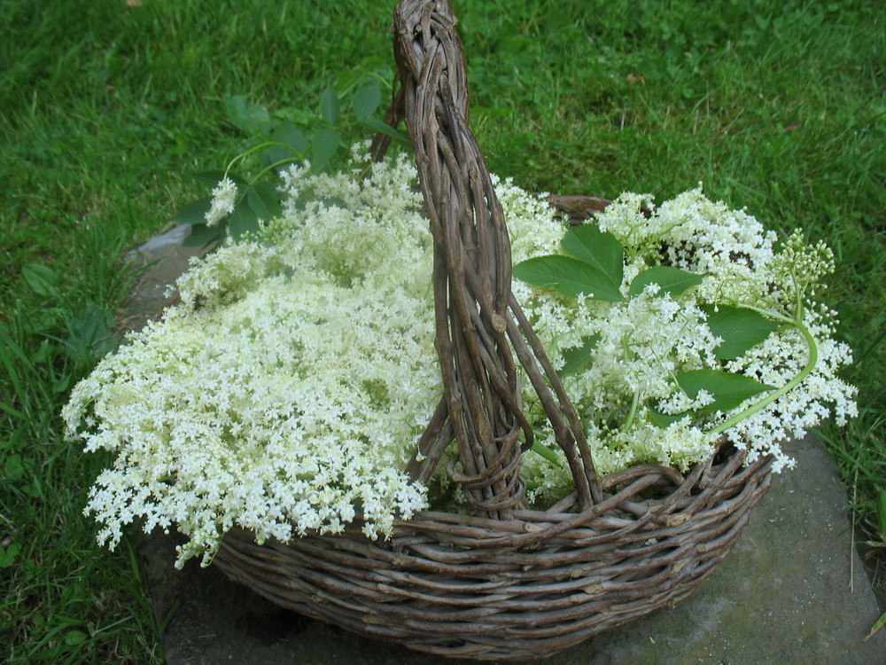 4.Elder Flower.jpg