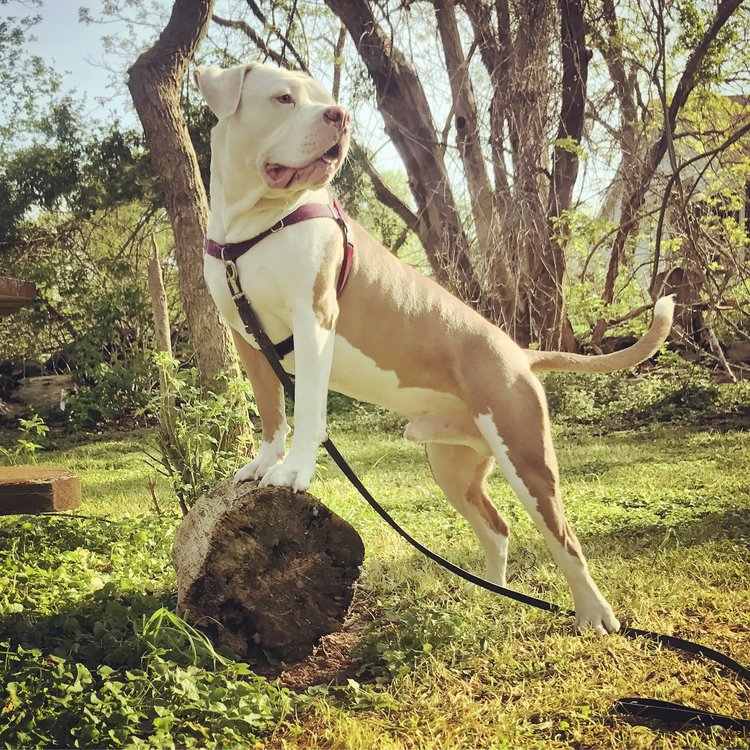 Blog the clever canine ri animals need motivation to do things they ordinarily wouldnt in the case of dogs this could mean sitting when greeting a group of children m4hsunfo