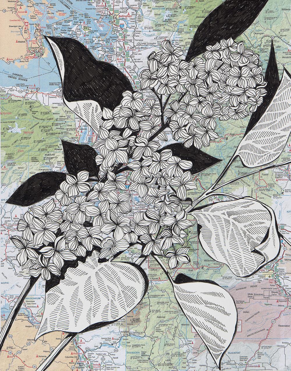 SARR_NW Lilacs