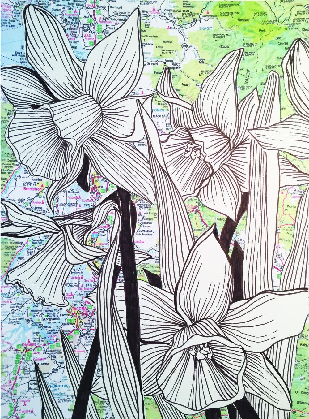 SARR_NW Daffodils