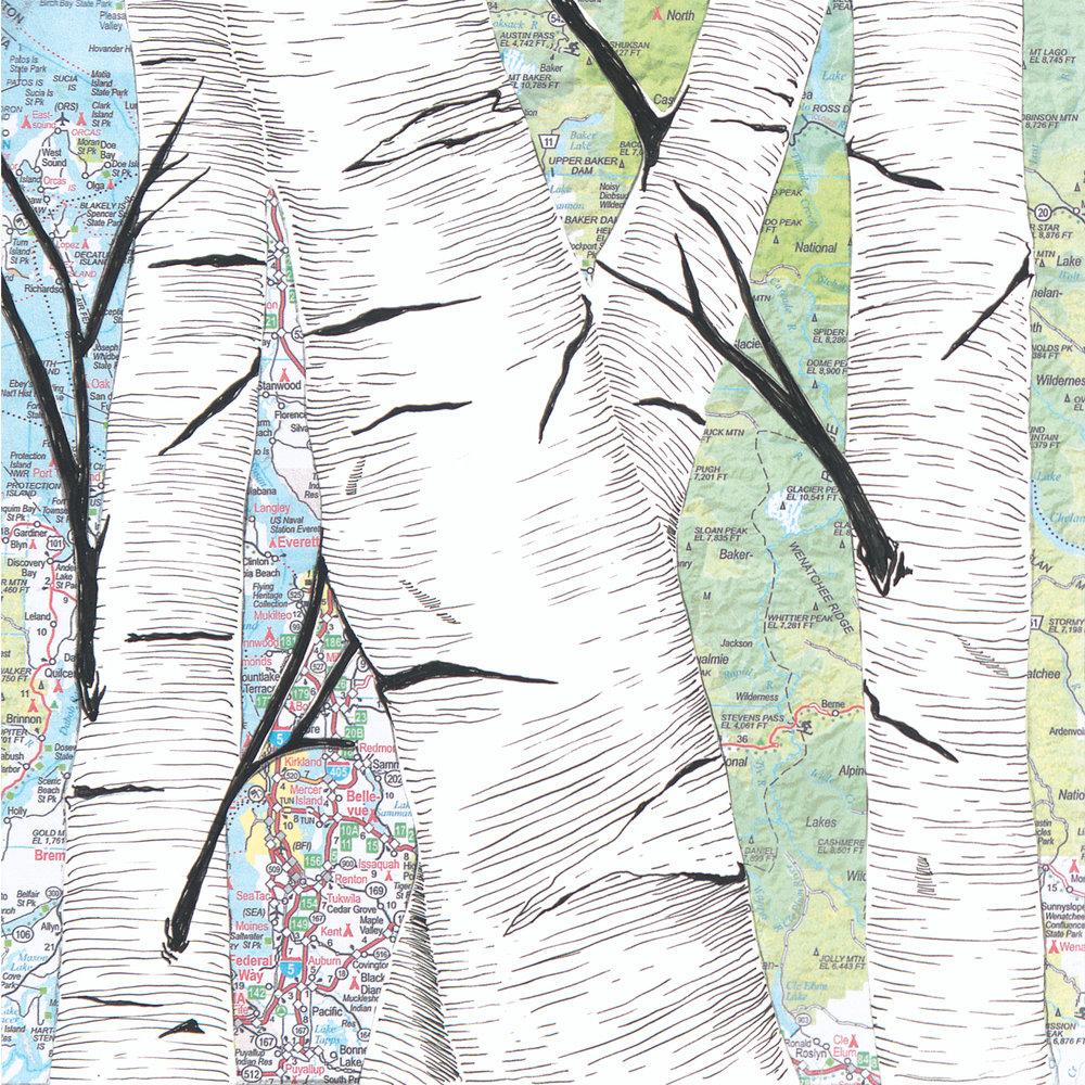 Birch Tree #4