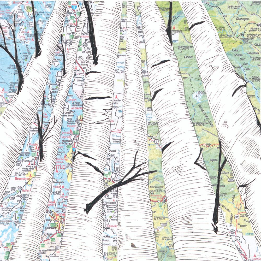 Birch Tree #5