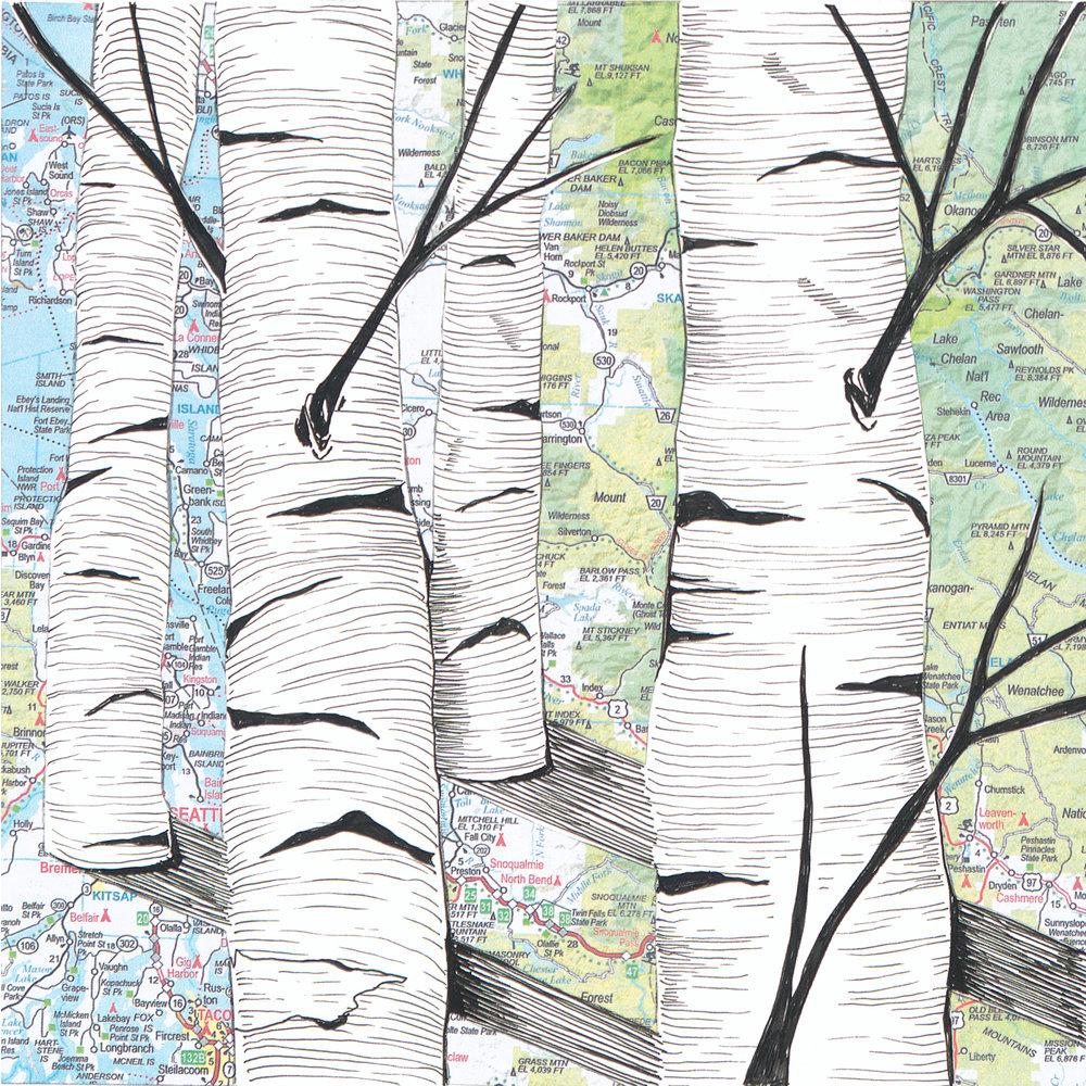 Birch Tree #9