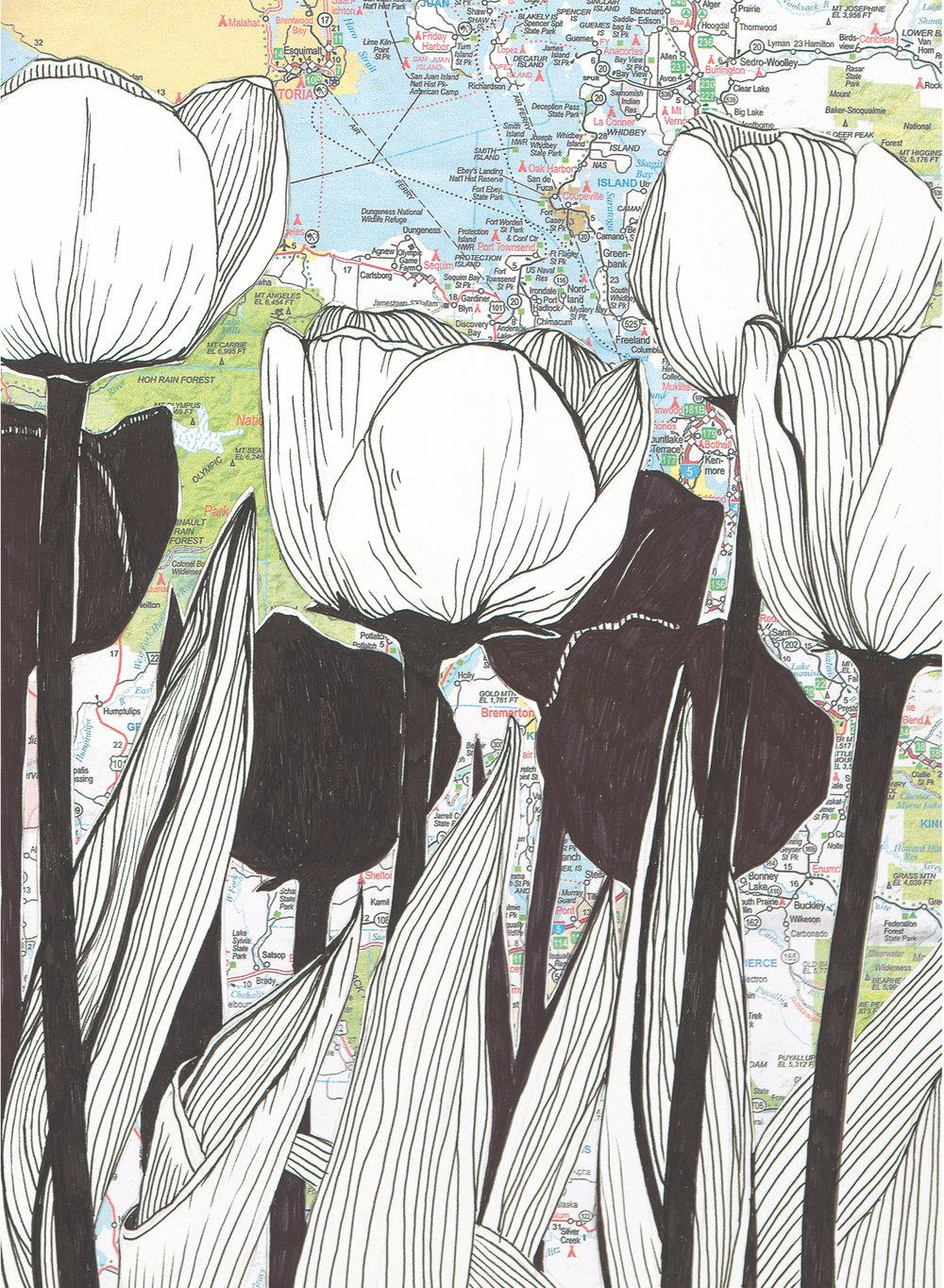 NW Tulips