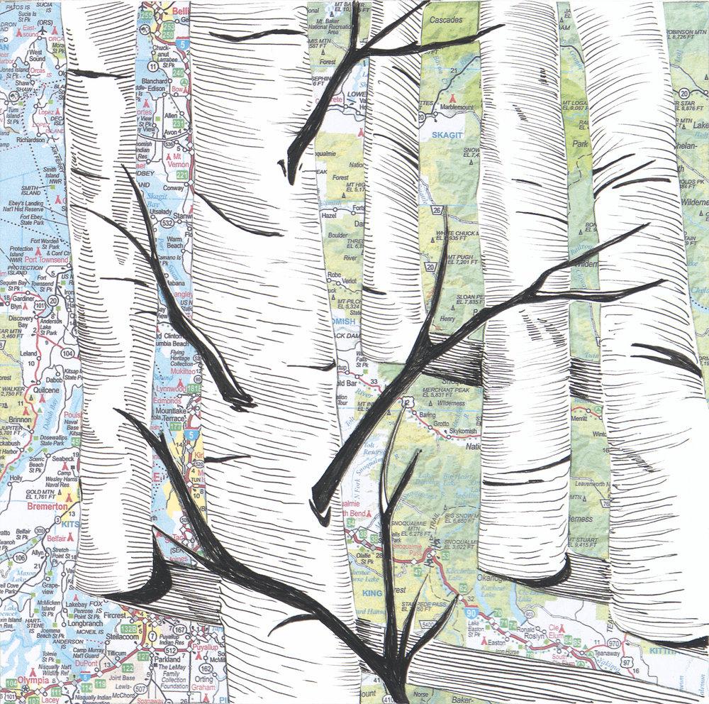 Birch Trees #6
