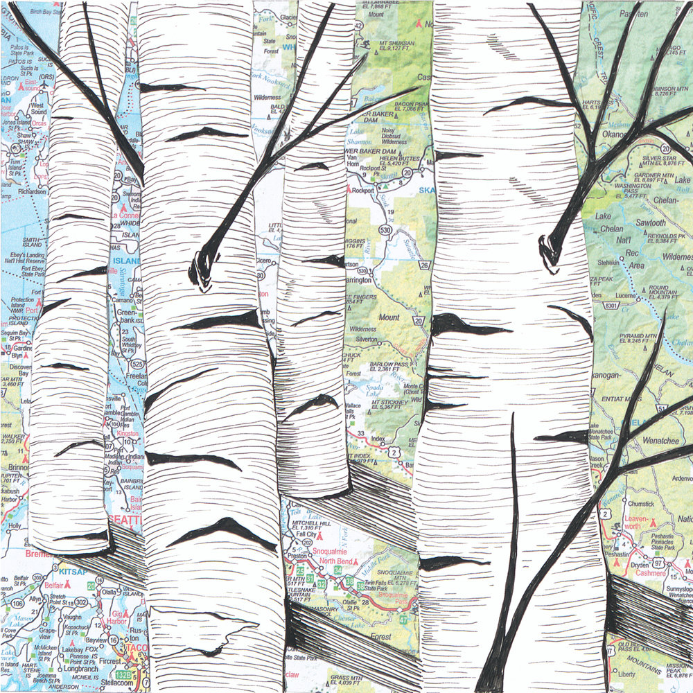 Birch Trees #9