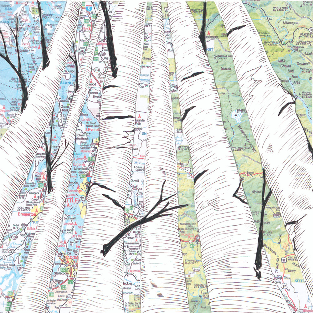 Birch Tree #5.jpg