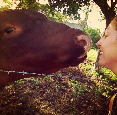 Ben the pet bull!