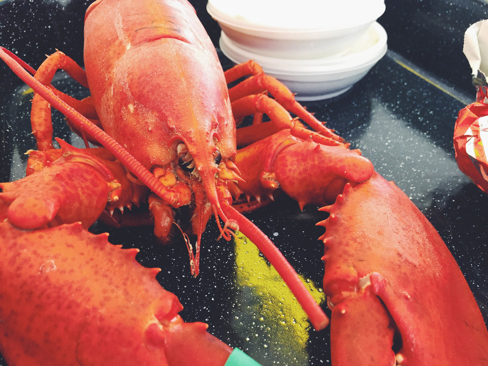 maine-05-2015-lobster
