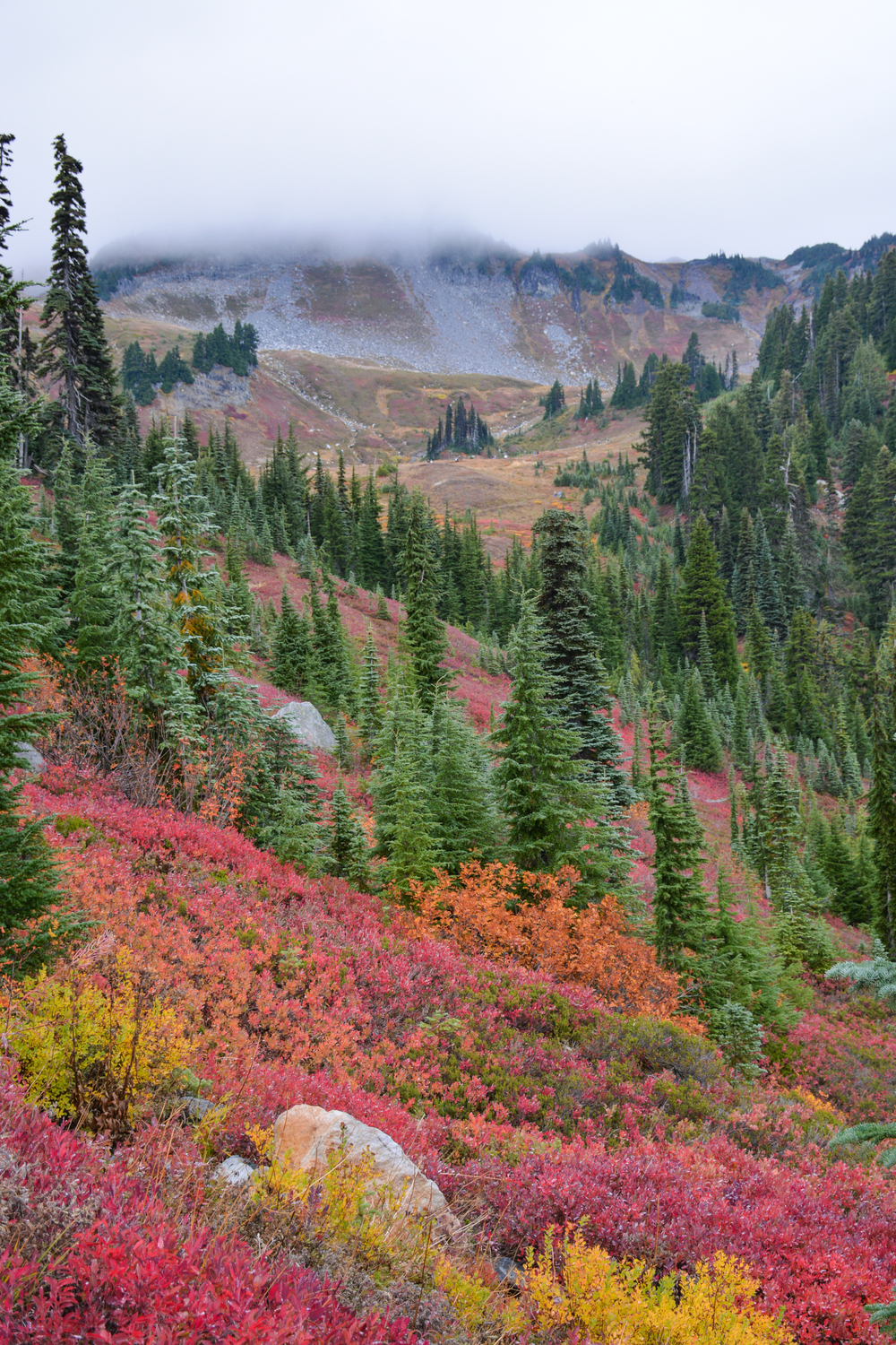 Alpine Autumn - Mount Rainier National Park