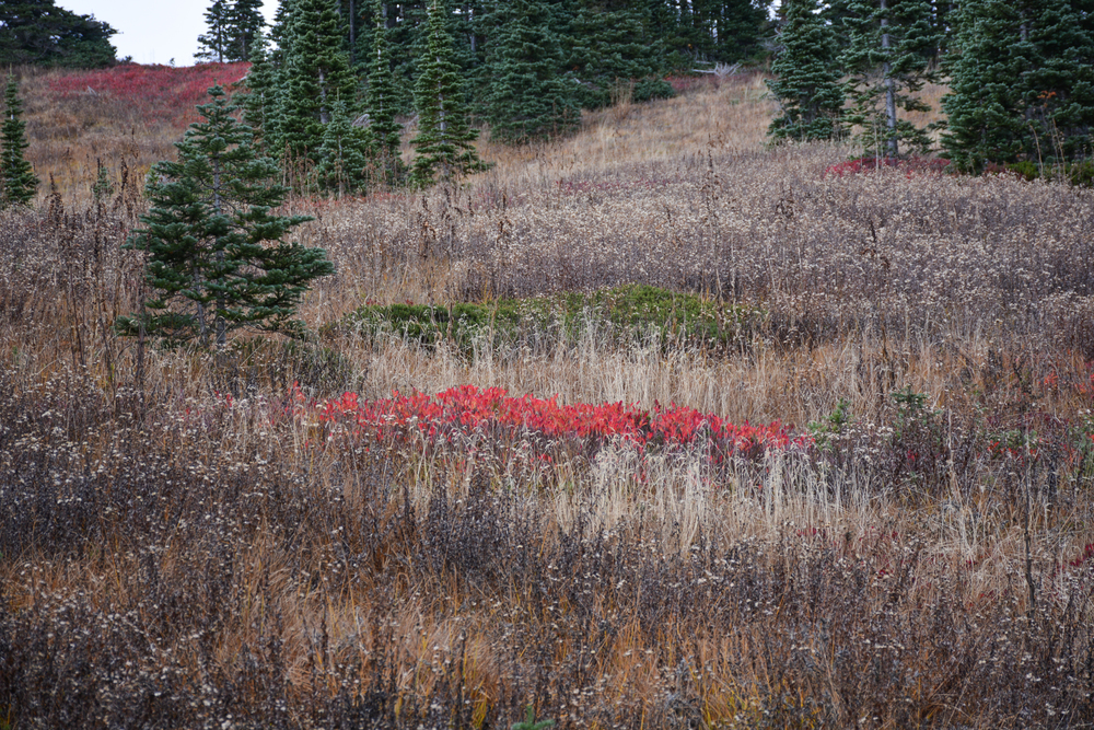 Faded autumn colors in the sub-alpine tundra