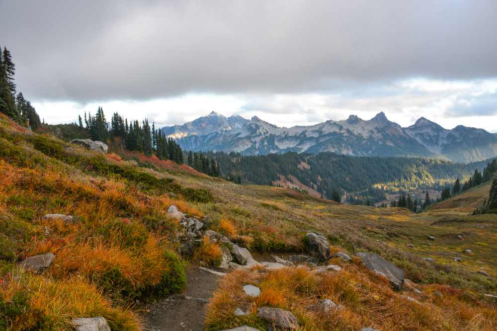 Trail at Paradise, Mount Rainier National Park