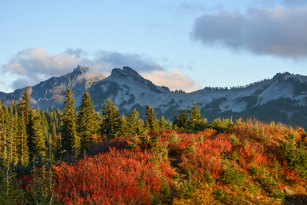 Fall foliage against the Tatoosh Range in the background