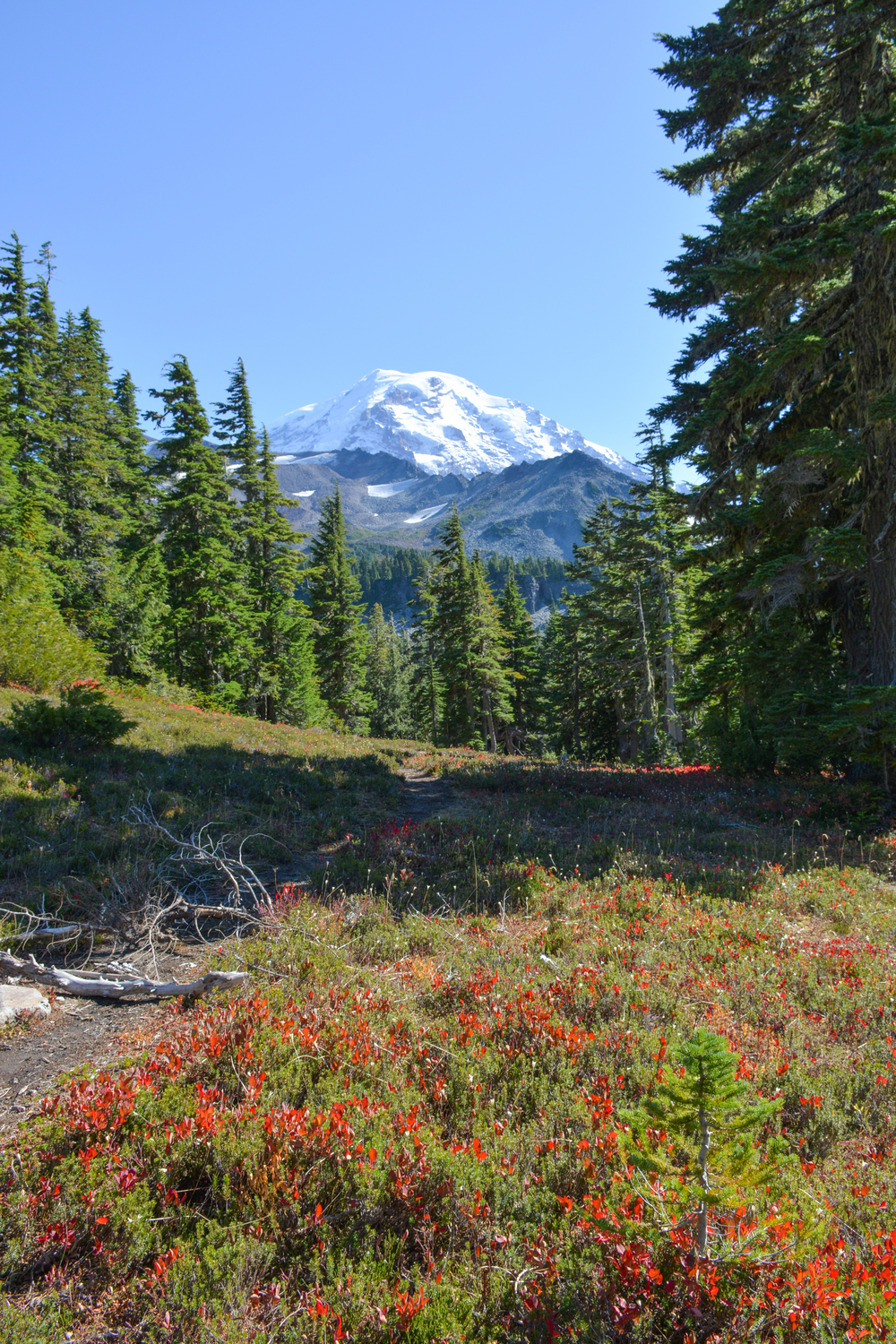 Spray Park, Mount Rainier