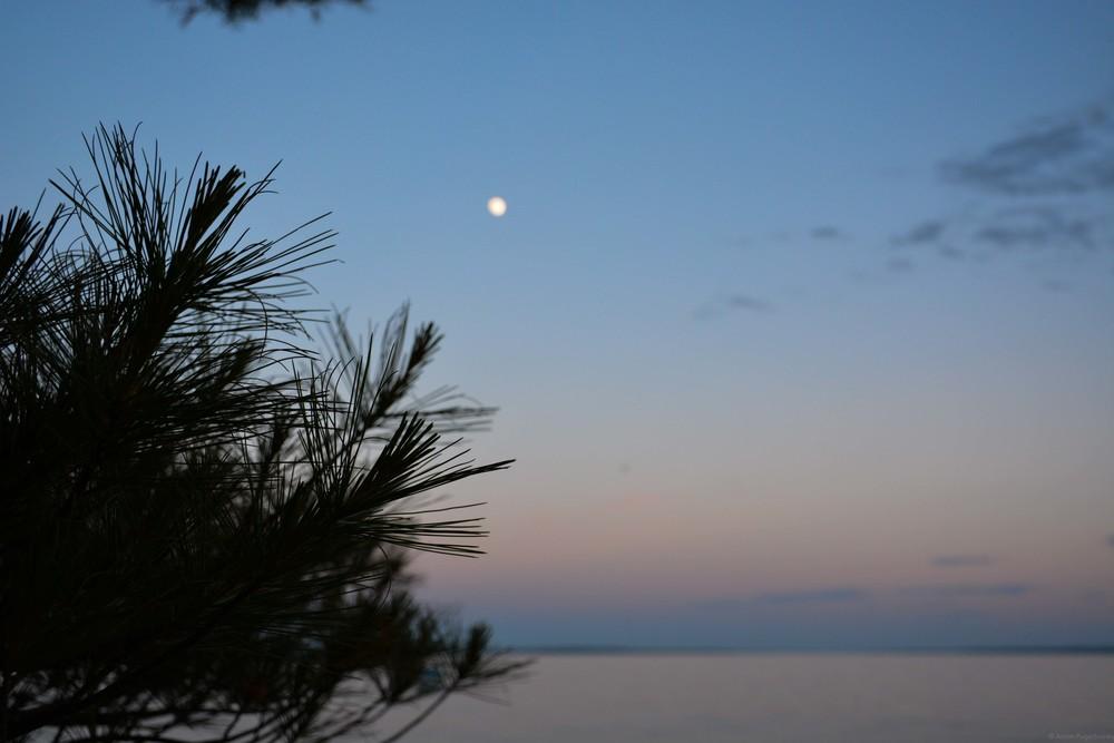 Pine needles at moonrise over Lake Sebago