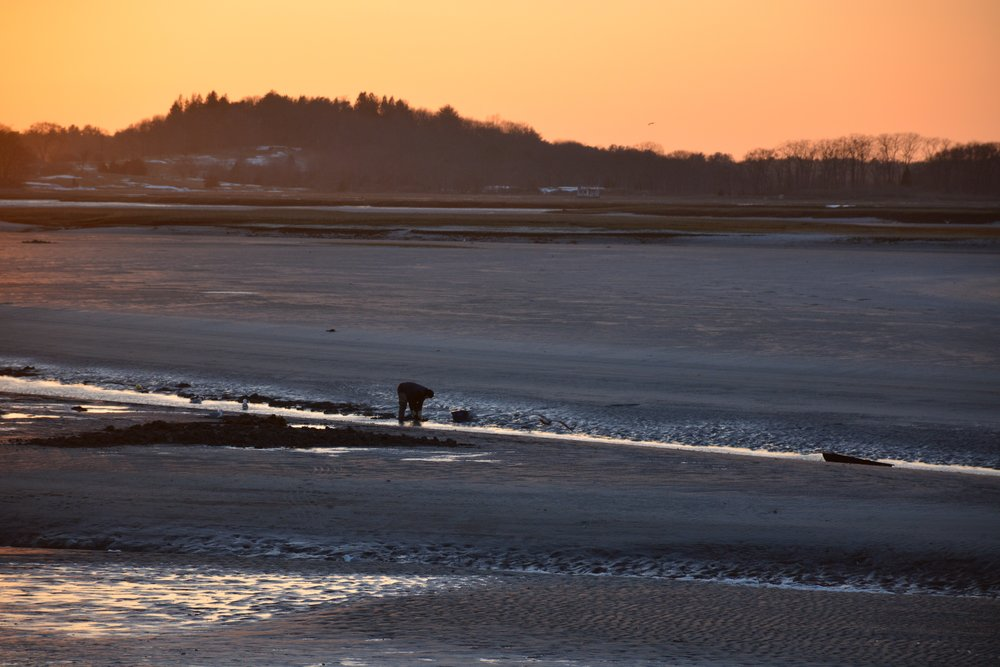Clammer scavenging for a catch on a late afternoon in March.