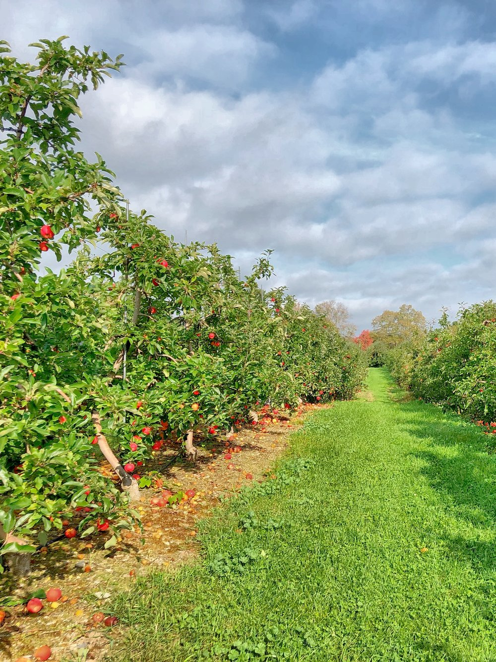 New Hampshire Apple Picking Orchard