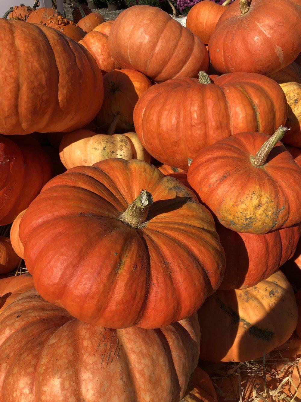 New Hampshire Autumn Pumpkins